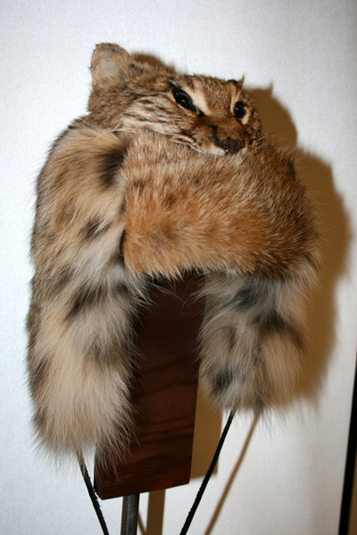 313169df217 Wildlife Minnesota - Trapper Head Hats   Mountain Man
